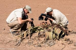 Kharos, Khurub, Welwitschia - The Living Fossil-4