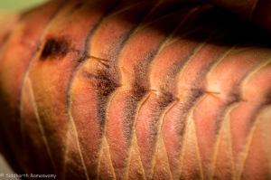 Kharos, Khurub, Welwitschia - The Living Fossil-5