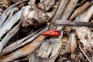 Kharos, Khurub, Welwitschia - The Living Fossil-8