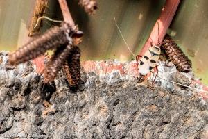 Kharos, Khurub, Welwitschia - The Living Fossil-9