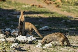 Namibia, A Road Trip - 2 - Onguma, Etosha-11