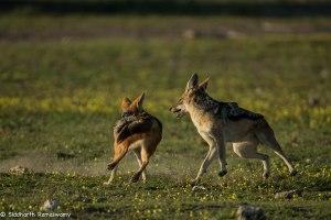 Namibia, A Road Trip - 2 - Onguma, Etosha-12