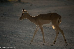 Namibia, A Road Trip - 2 - Onguma, Etosha-13