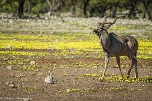 Namibia, A Road Trip - 2 - Onguma, Etosha-14
