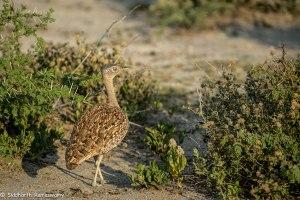Namibia, A Road Trip - 2 - Onguma, Etosha-16