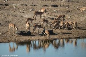 Namibia, A Road Trip - 2 - Onguma, Etosha-25