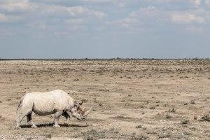 Namibia, A Road Trip - 2 - Onguma, Etosha-31