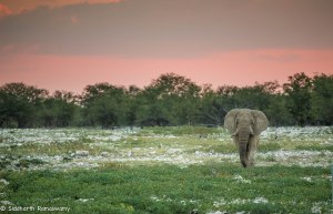 Namibia, A Road Trip - 2 - Onguma, Etosha-35