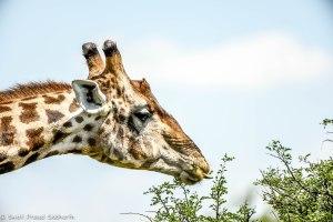 Namibia, A Road Trip - 2 - Onguma, Etosha-39