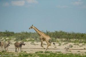 Namibia, A Road Trip - 2 - Onguma, Etosha-41