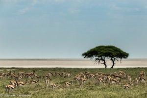 Namibia, A Road Trip - 2 - Onguma, Etosha-42