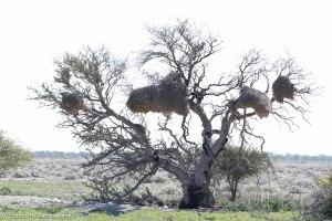 Namibia, A Road Trip - 2 - Onguma, Etosha-45