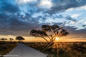 Namibia, A Road Trip - 2 - Onguma, Etosha-49