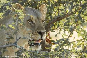 Namibia, A Road Trip - 2 - Onguma, Etosha-54