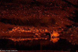 Namibia, A Road Trip - 2 - Onguma, Etosha-7