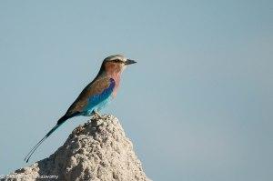 Namibia, A Road Trip - 2 - Onguma, Etosha-8