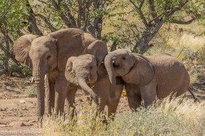 Namibia, A Road Trip - 3 - Damaraland-18