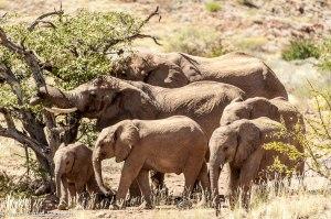 Namibia, A Road Trip - 3 - Damaraland-19