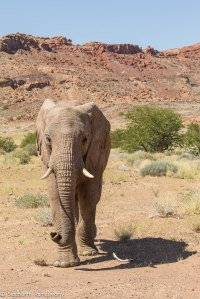 Namibia, A Road Trip - 3 - Damaraland-20