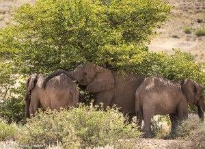 Namibia, A Road Trip - 3 - Damaraland-23