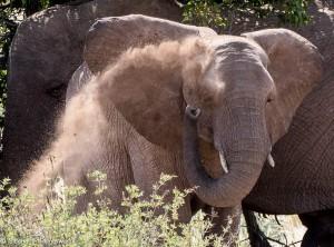 Namibia, A Road Trip - 3 - Damaraland-25