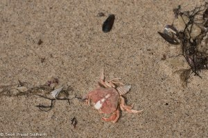 Namibia, A Road Trip - 4 - Skeleton Coast-15