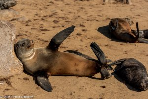 Namibia, A Road Trip - 4 - Skeleton Coast-19