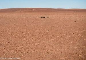 Namibia, A Road Trip - 4 - Skeleton Coast-3