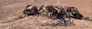 Namibia, A Road Trip - 4 - Skeleton Coast-4
