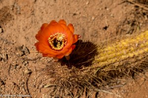 Namibia, A Road Trip - 5 - Wolwedans-14