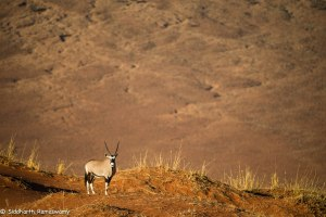 Namibia, A Road Trip - 5 - Wolwedans-18
