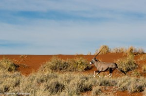 Namibia, A Road Trip - 5 - Wolwedans-34