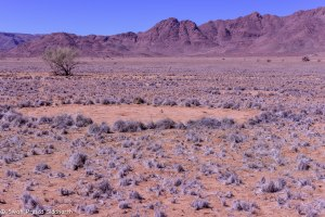 Namibia, A Road Trip - 5 - Wolwedans-46