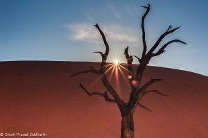 Namibia, A Road Trip - 6 - Sossusvlei, Dead Vlei-10