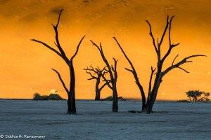 Namibia, A Road Trip - 6 - Sossusvlei, Dead Vlei-12