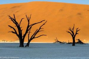 Namibia, A Road Trip - 6 - Sossusvlei, Dead Vlei-13