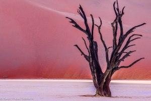 Namibia, A Road Trip - 6 - Sossusvlei, Dead Vlei-15