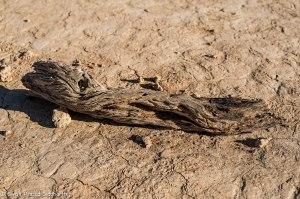 Namibia, A Road Trip - 6 - Sossusvlei, Dead Vlei-18