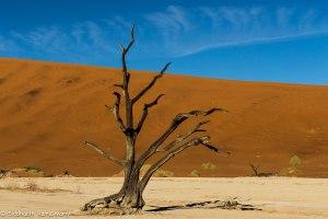 Namibia, A Road Trip - 6 - Sossusvlei, Dead Vlei-20