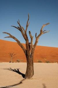 Namibia, A Road Trip - 6 - Sossusvlei, Dead Vlei-22