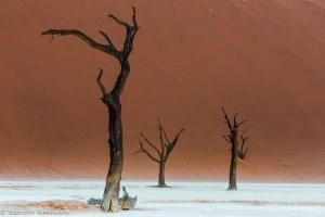 Namibia, A Road Trip - 6 - Sossusvlei, Dead Vlei-23