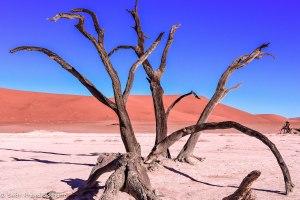 Namibia, A Road Trip - 6 - Sossusvlei, Dead Vlei-24