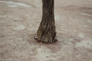 Namibia, A Road Trip - 6 - Sossusvlei, Dead Vlei-25