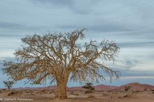 Namibia, A Road Trip - 6 - Sossusvlei, Dead Vlei-29