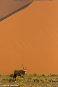 Namibia, A Road Trip - 6 - Sossusvlei, Dead Vlei-33