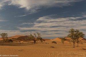 Namibia, A Road Trip - 6 - Sossusvlei, Dead Vlei-36