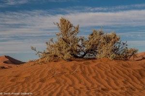 Namibia, A Road Trip - 6 - Sossusvlei, Dead Vlei-37