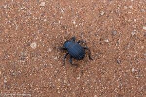 Namibia, A Road Trip - 6 - Sossusvlei, Dead Vlei-38