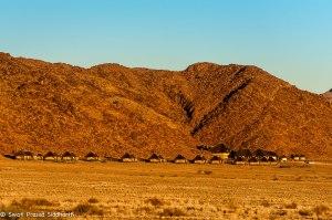 Namibia, A Road Trip - 6 - Sossusvlei, Dead Vlei-4