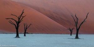 Namibia, A Road Trip - 6 - Sossusvlei, Dead Vlei-8